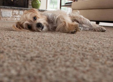 Got Pets? See Our Top Flooring Picks.